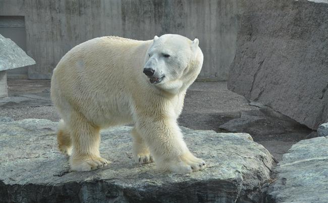 bucket-list-destinations-polar-bear