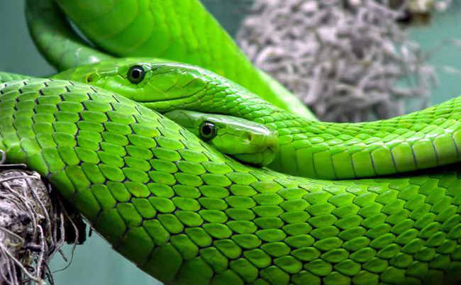 saint-patricks-day-snakes